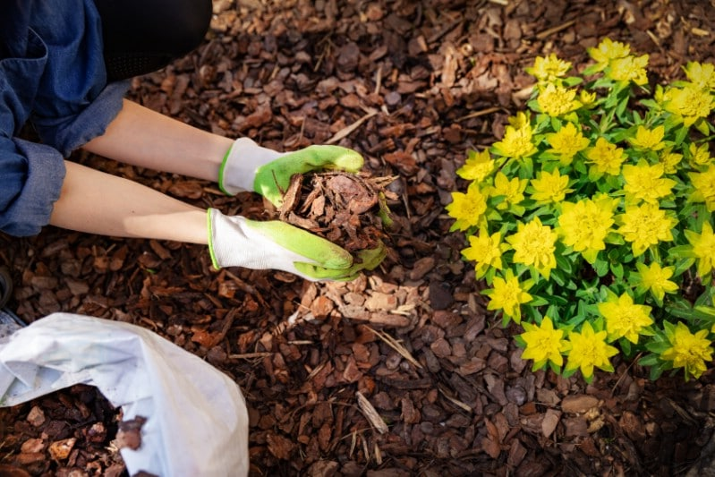 Mulch application San Antonio