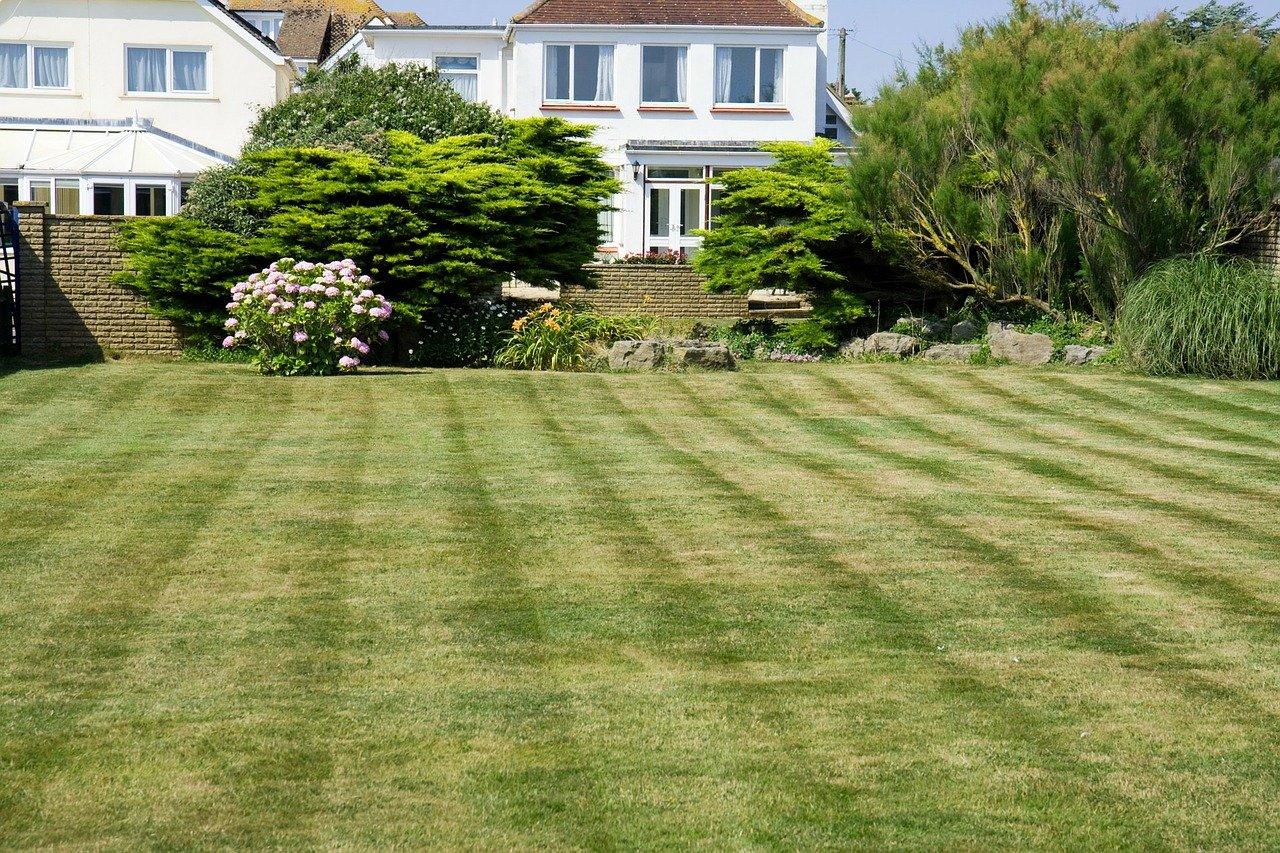 Lawn Health